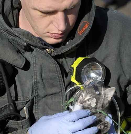 firefighters-rescuing-animals-saving-pets-13-5729bcb3ec386__605