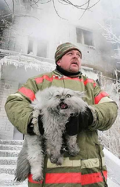 firefighters-rescuing-animals-saving-pets-49-5729f4c1c66b9__605