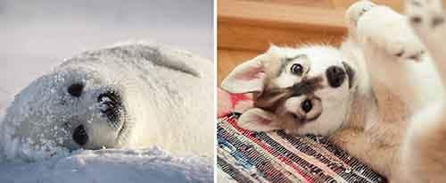 Funny-seals-look-like-dogs-574ec0b8788d1__880