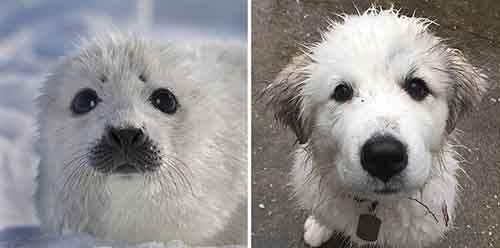 funny-seals-look-like-dogs-19-574d9b330ec36__880