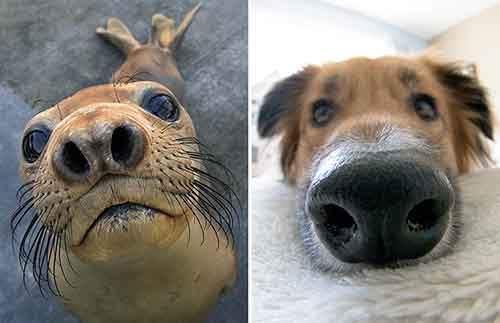 funny-seals-look-like-dogs-21-574ead52ce1e8__880