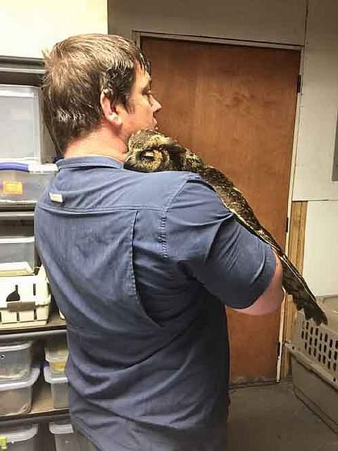 rescue-owl-hugs-man-gigi-douglas-pojeky-4