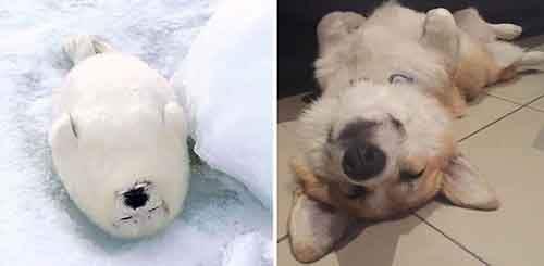 seals-look-like-dogs-13