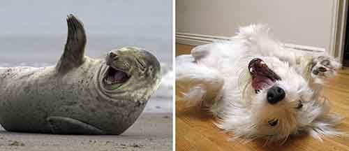 seals-look-like-dogs-6-574d4ee2724b5__880